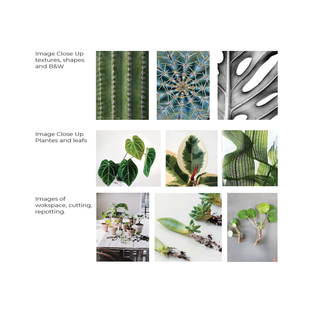plant photography guideline