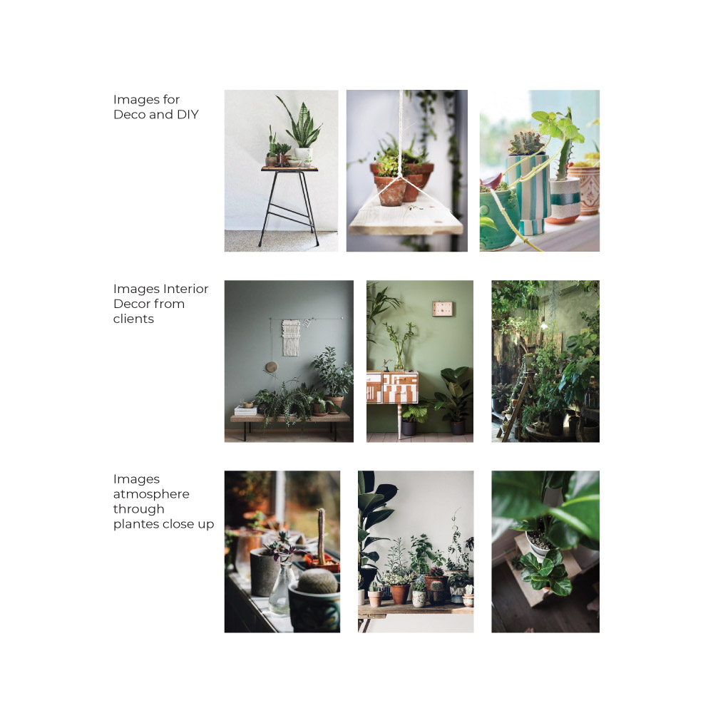 Plant interior design photography guidelines