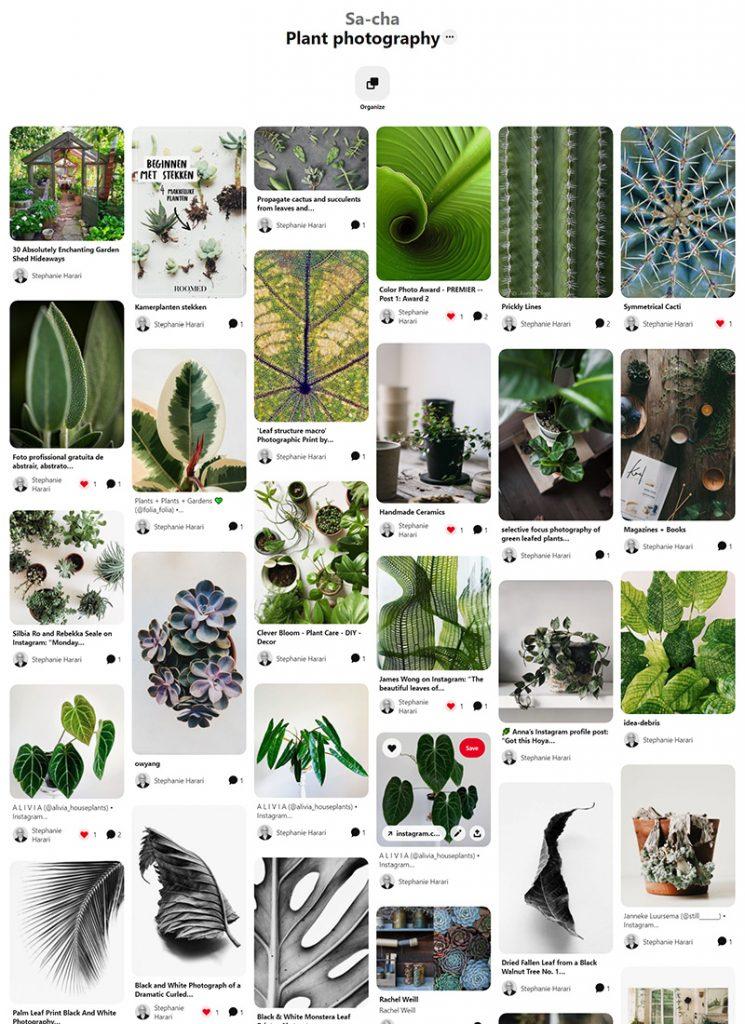 Sa-Cha Photographic inspiration pinterest board